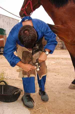 La profesion de herrador, herrando a un caballo
